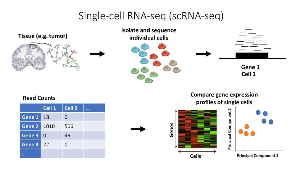 Single-cell RNA-seq (scRNA-seq) Cell 1 Cell 2 …...