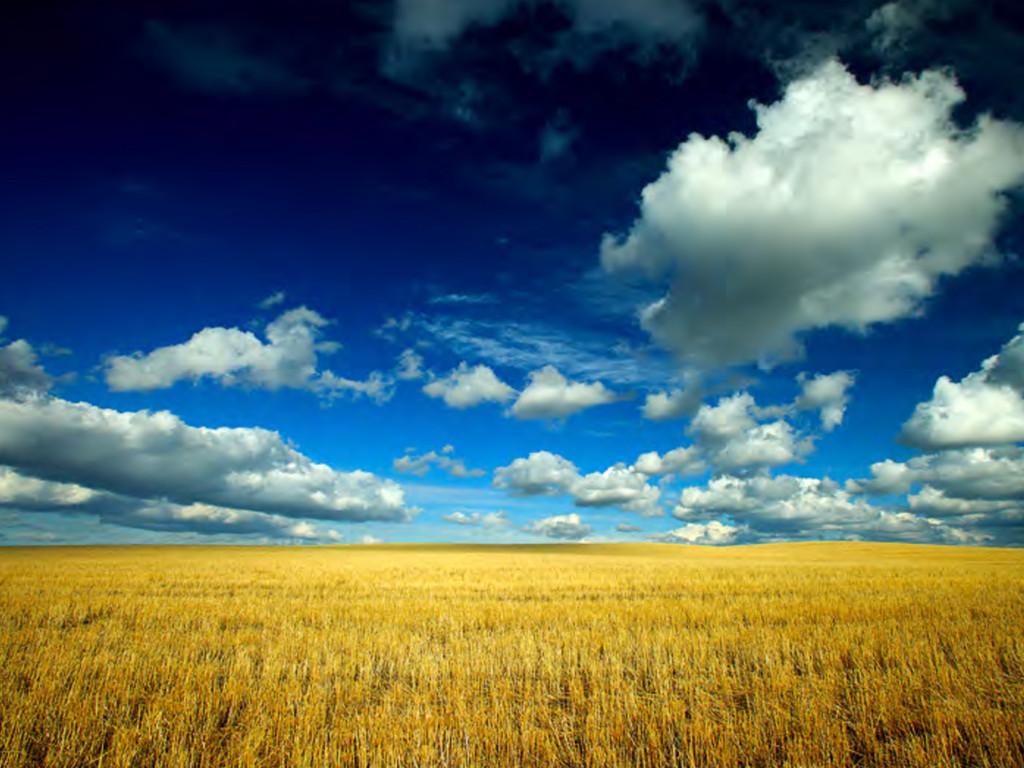 Argentina Agribusiness
