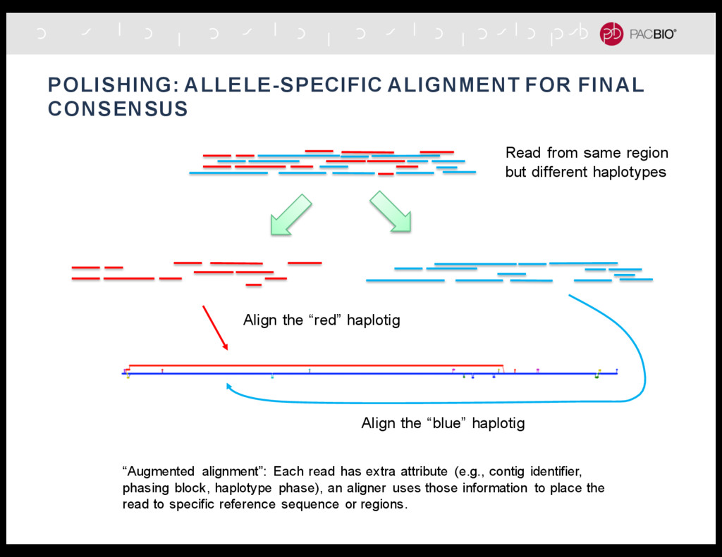 POLISHING: ALLELE-SPECIFIC ALIGNMENT FOR FINAL ...