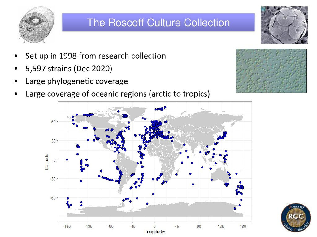 The Roscoff Culture Collection • Set up in 1998...