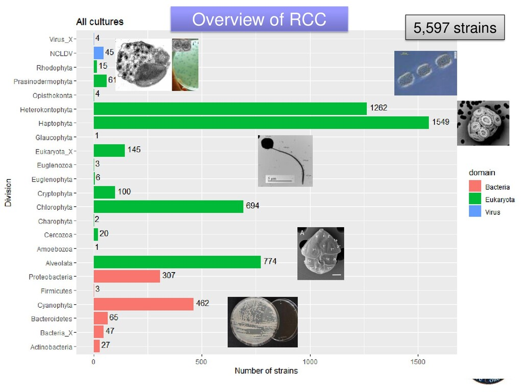 5,597 strains Overview of RCC
