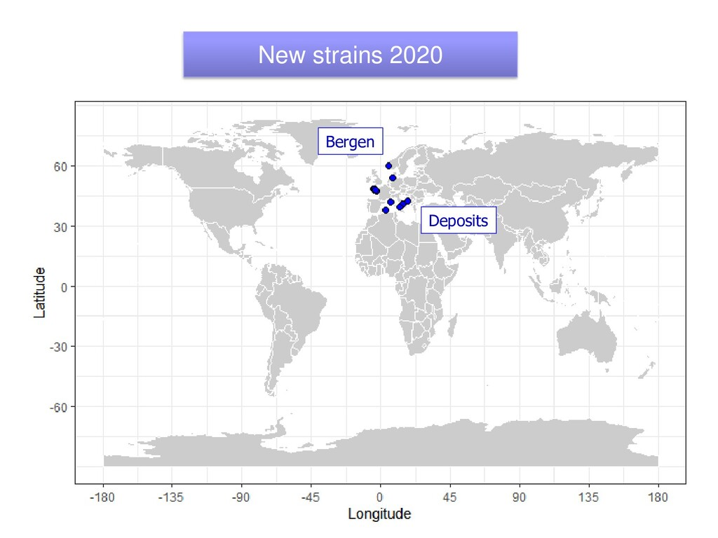 New strains 2020 Deposits Bergen