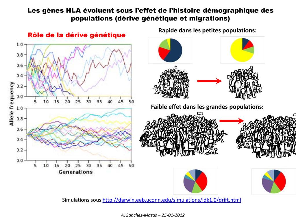 Les gènes HLA évoluent sous l'effet de l'histoi...