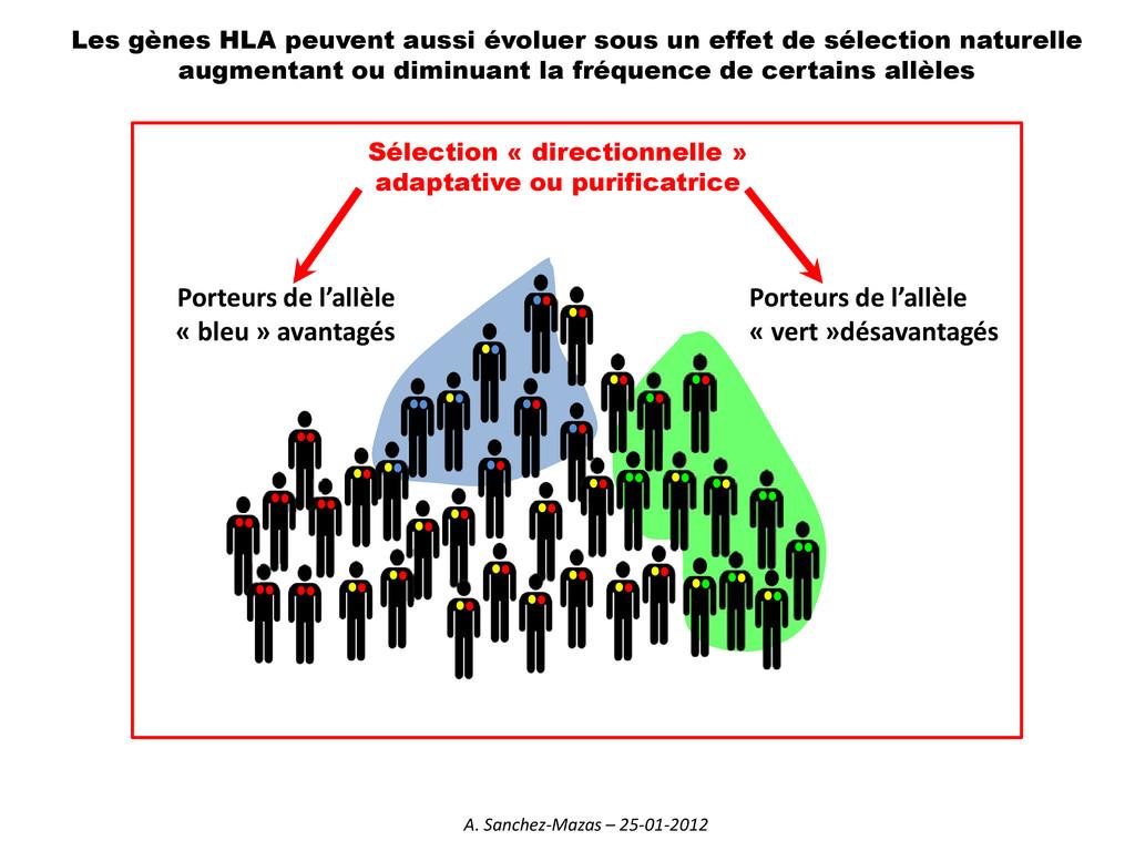 Sélection « directionnelle » adaptative ou puri...