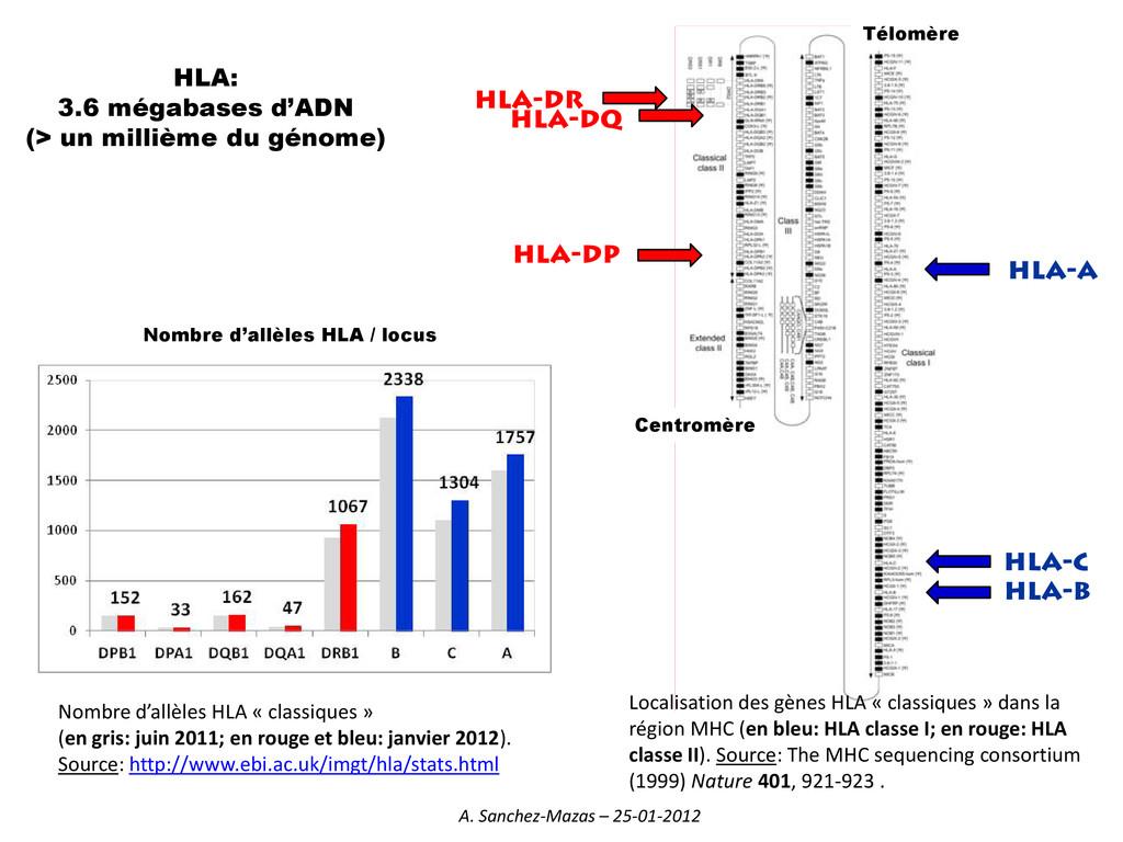 Localisation des gènes HLA « classiques » dans ...