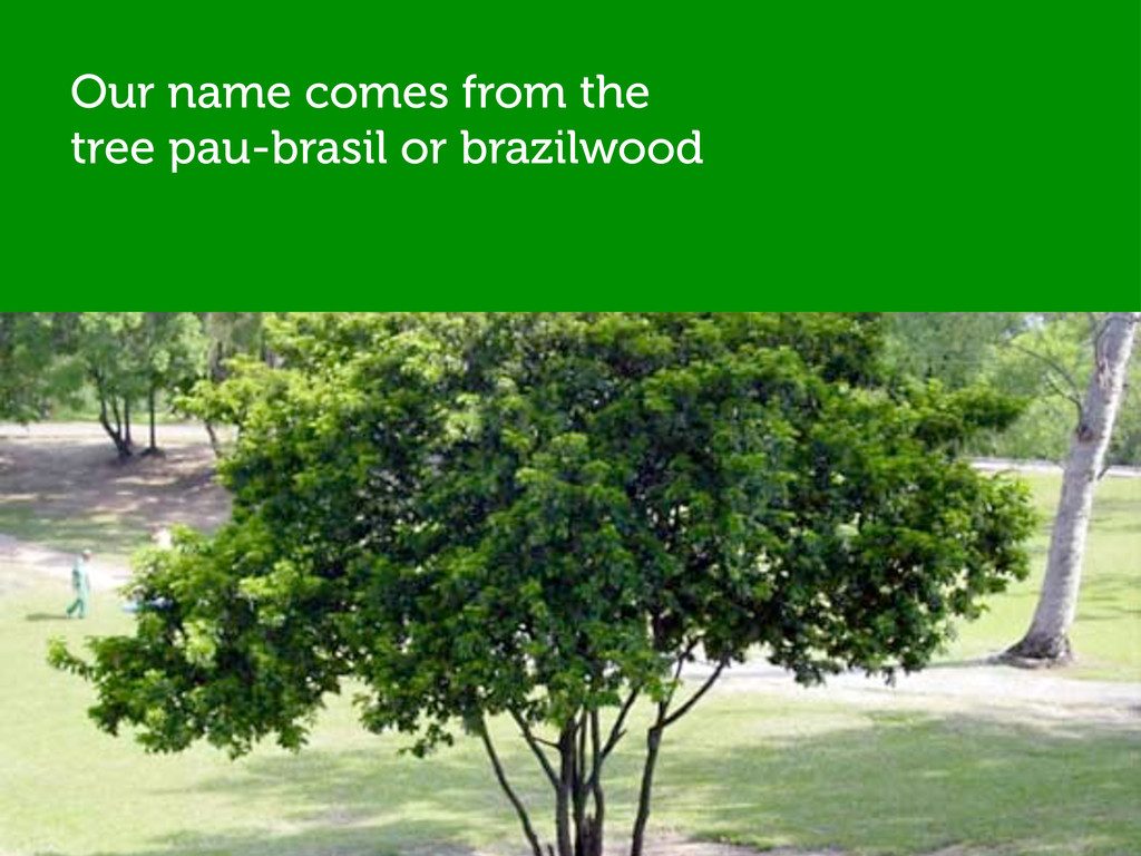 Our name comes from the tree pau-brasil or braz...