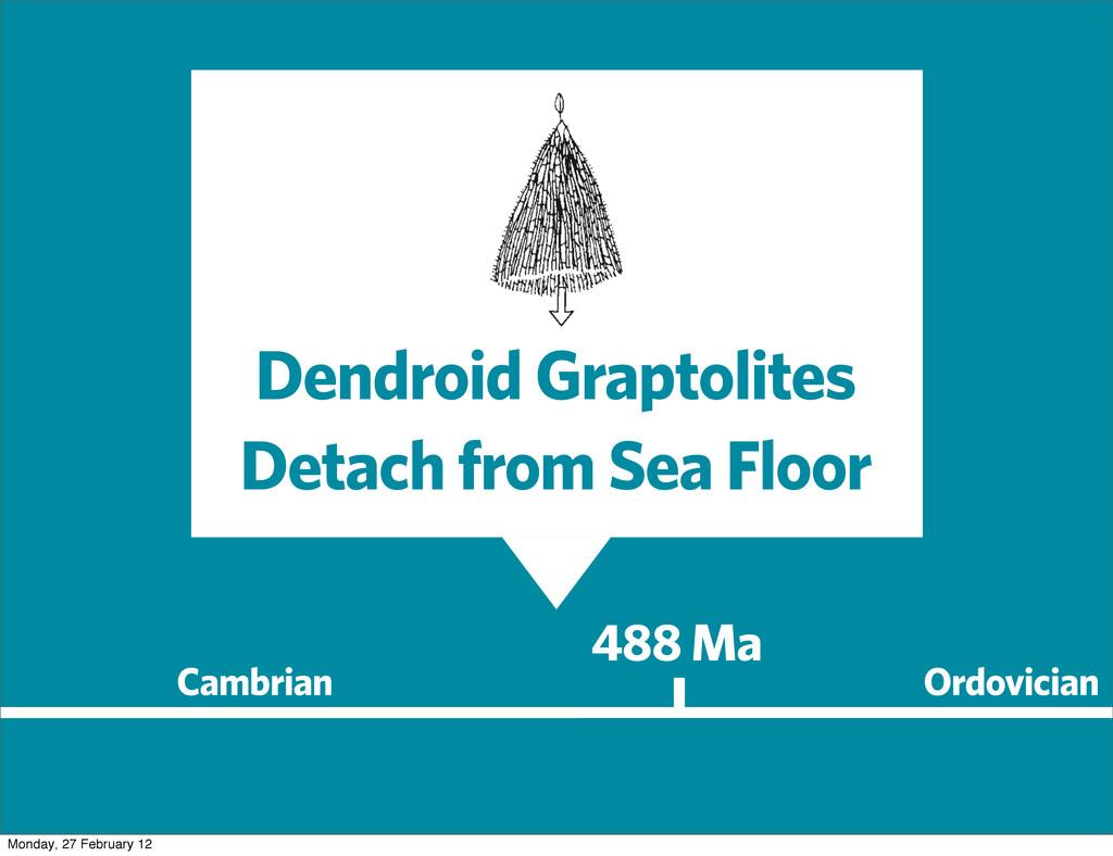 488 Ma Cambrian Ordovician Dendroid Graptolites...