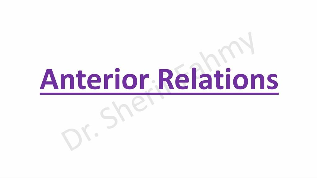Anterior Relations