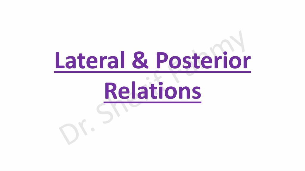 Lateral & Posterior Relations