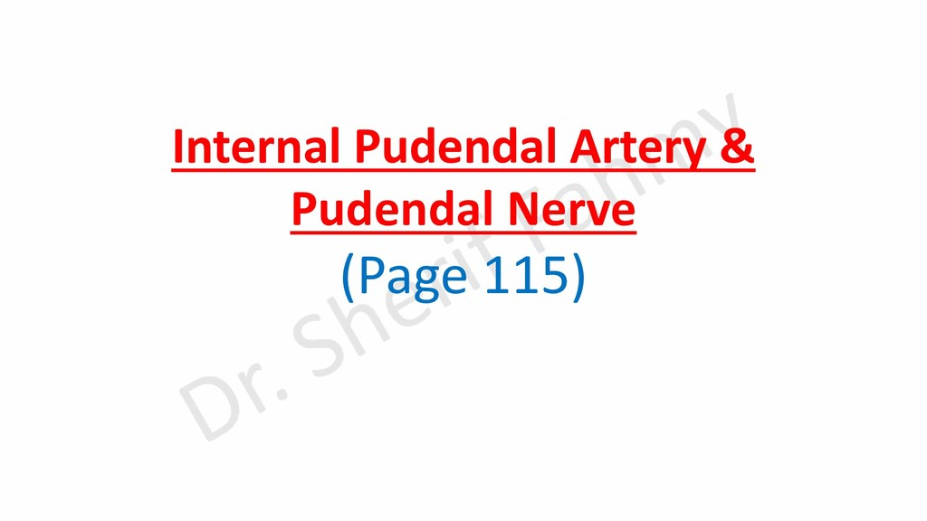 Internal Pudendal Artery & Pudendal Nerve (Page...