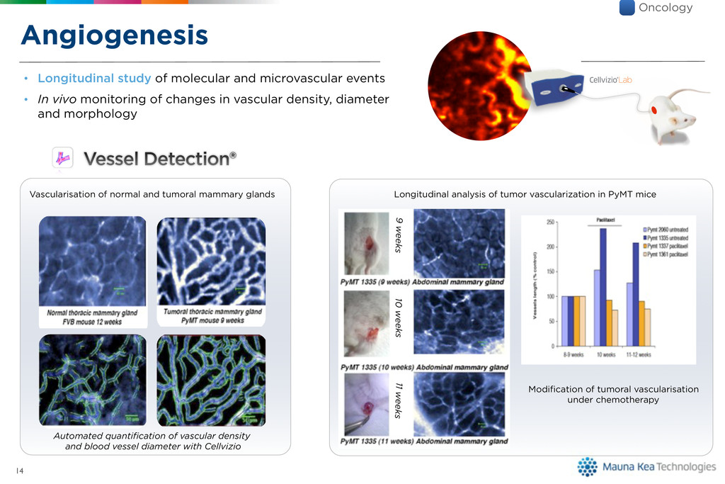 Angiogenesis 14 Vascularisation of normal and t...