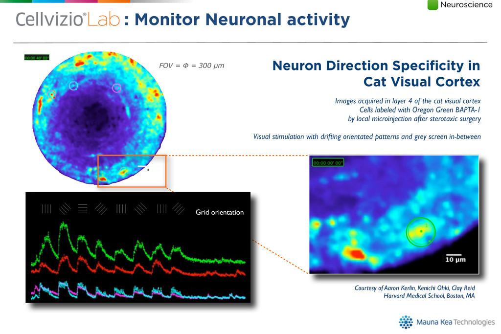 Neuron Direction Specificity in Cat Visual Corte...