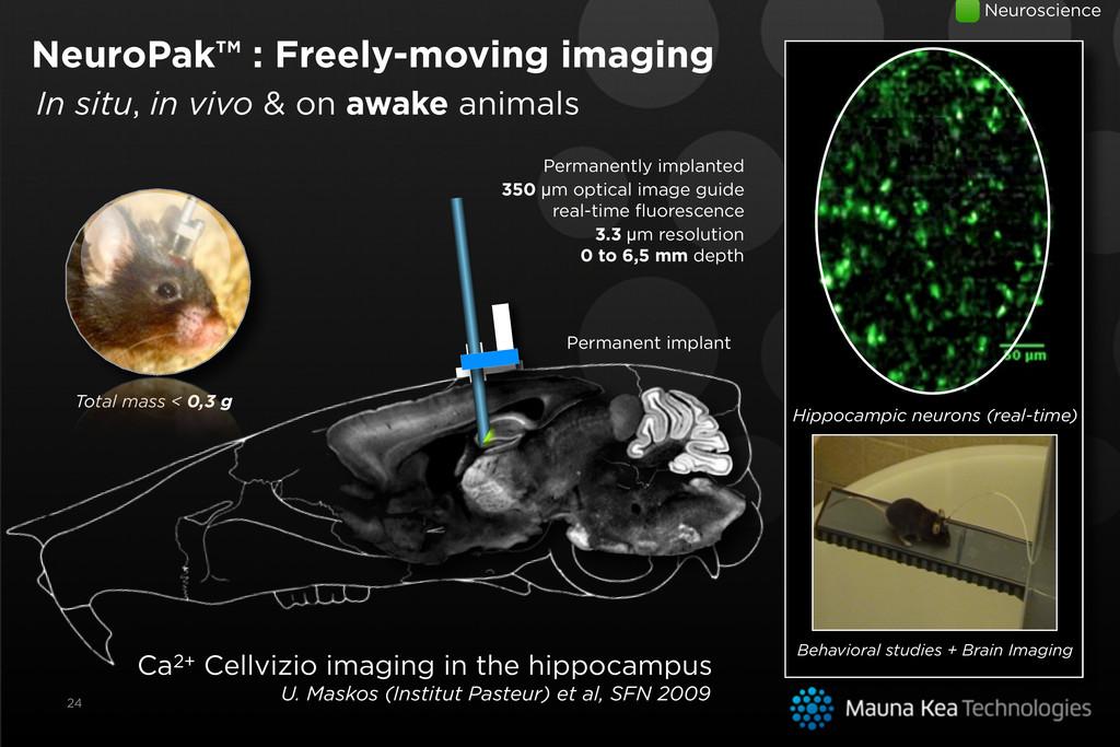 Ca2+ Cellvizio imaging in the hippocampus U. Ma...