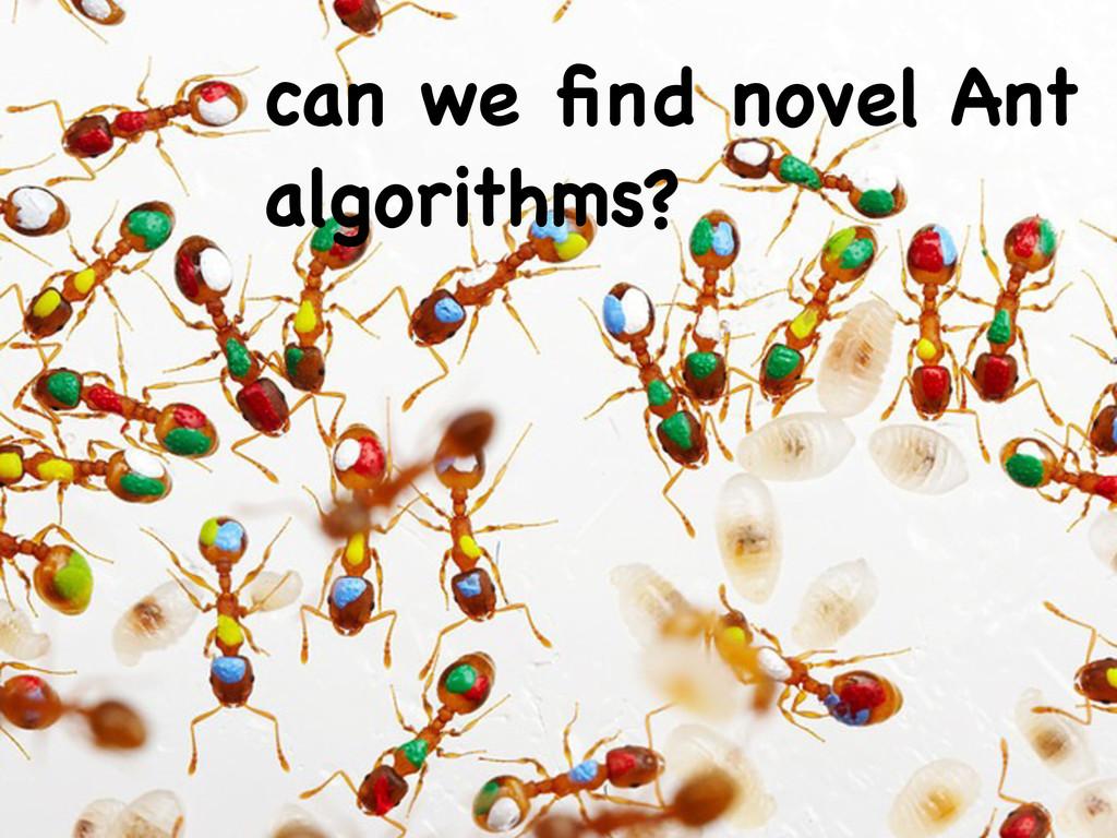 can we find novel Ant algorithms?