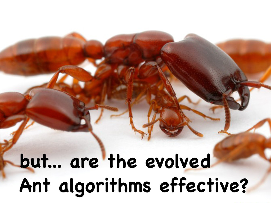 but... are the evolved Ant algorithms effective?