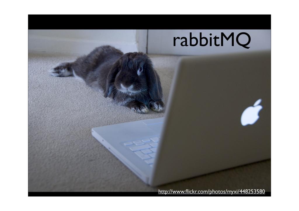 http://www.flickr.com/photos/myxi/448253580 rabb...