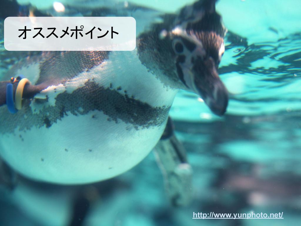 オススメポイント http://www.yunphoto.net/