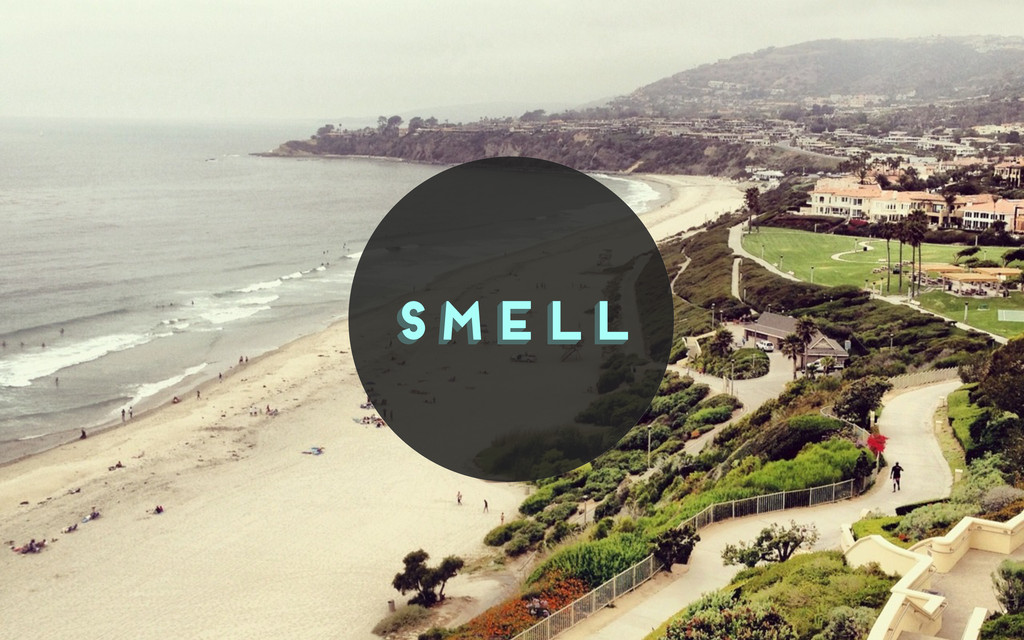 smell smell