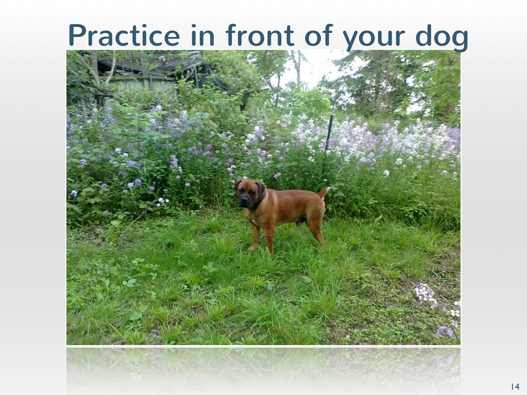 Practice in front of your dog 14
