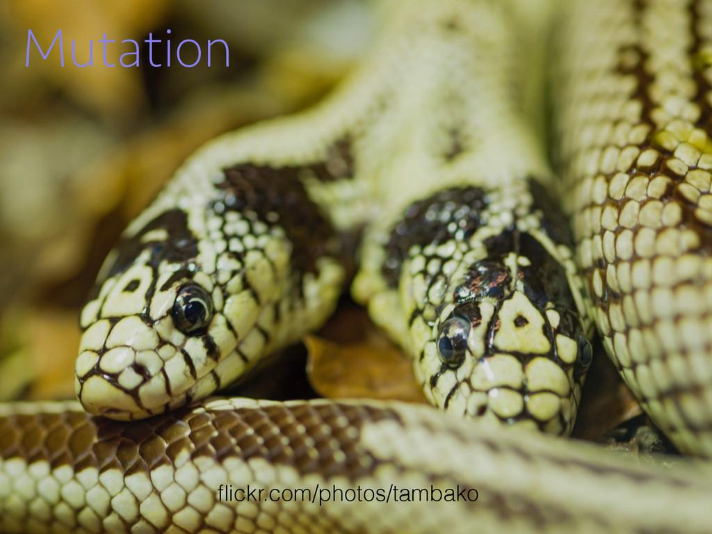 Mutation flickr.com/photos/tambako