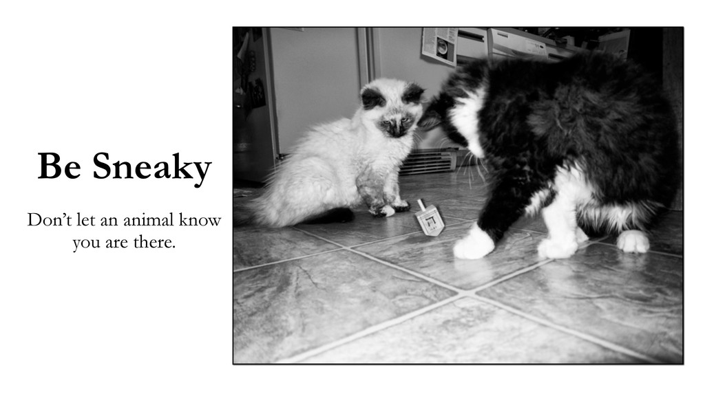 Be Sneaky Don't let an animal know you are ther...