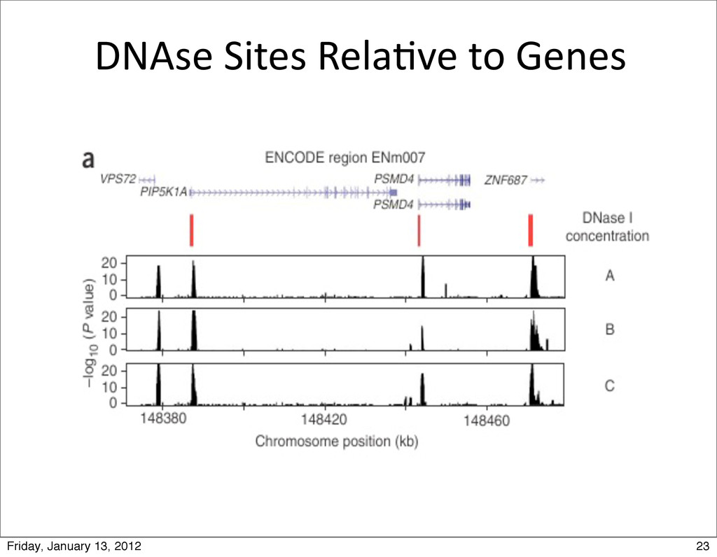 DNAse Sites Rela0ve to Genes 23 Fri...