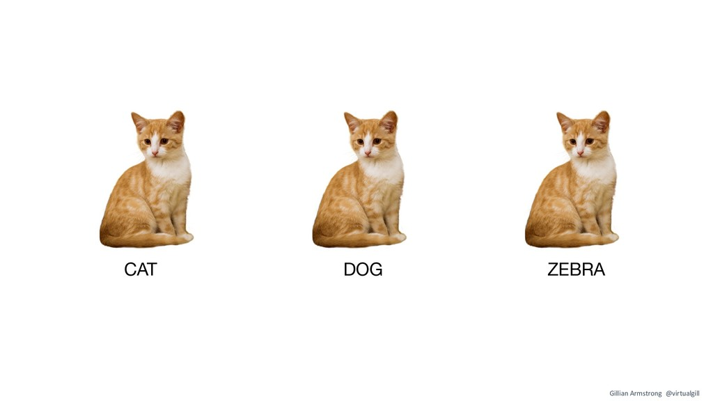 CAT DOG ZEBRA Gillian Armstrong @virtualgill