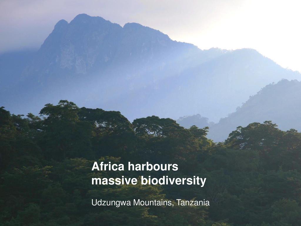 Africa harbours massive biodiversity Udzungwa M...