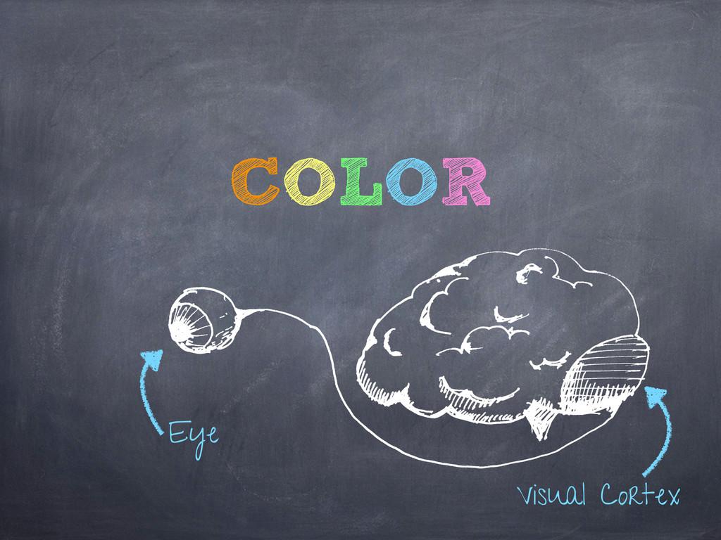 Eye Visual Cortex COLOR