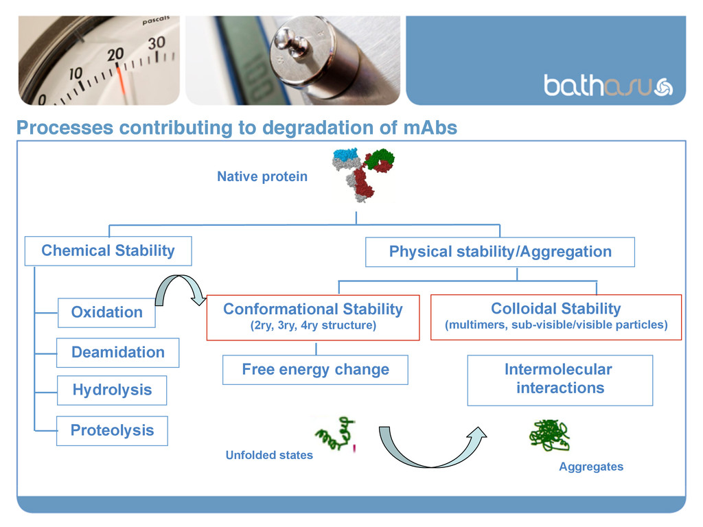 Processes contributing to degradation of mAbs! ...