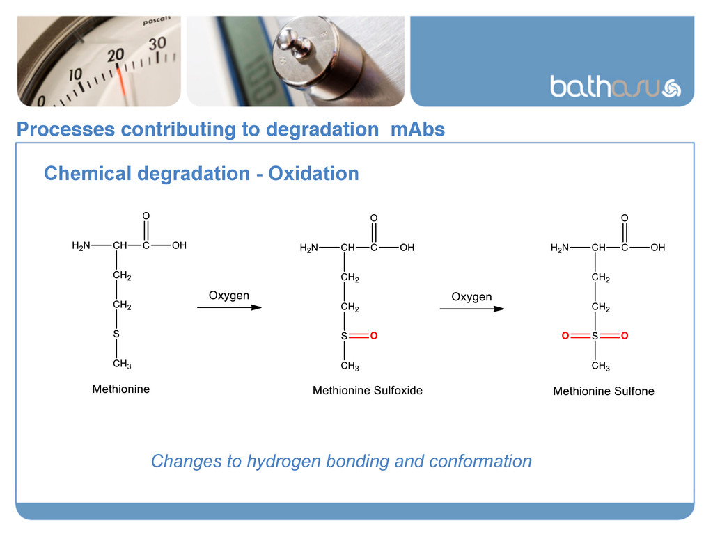Processes contributing to degradation mAbs! Che...