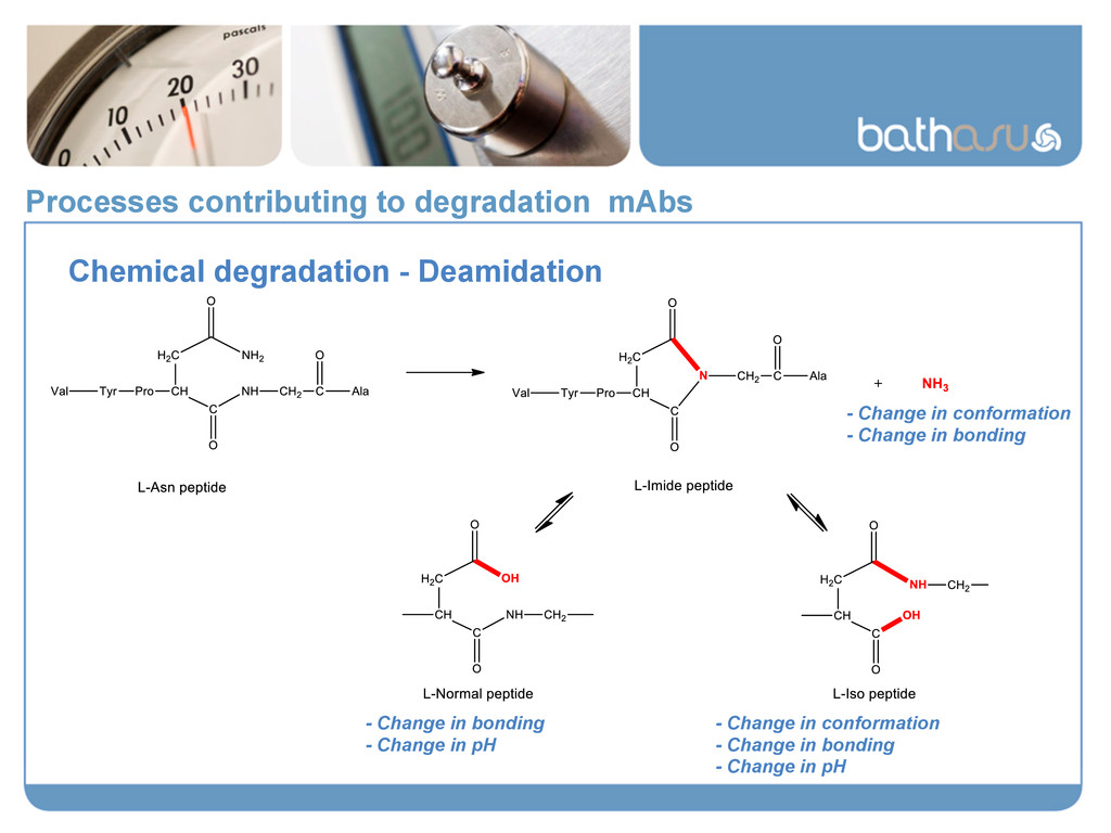Processes contributing to degradation mAbs Chem...