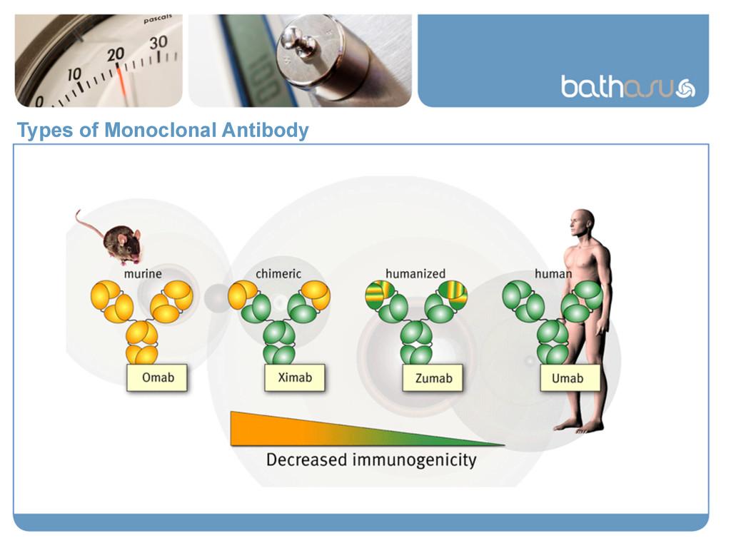 Types of Monoclonal Antibody