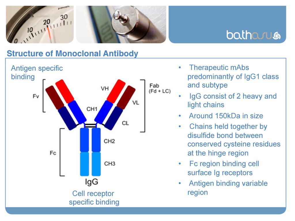 Structure of Monoclonal Antibody! Antigen speci...