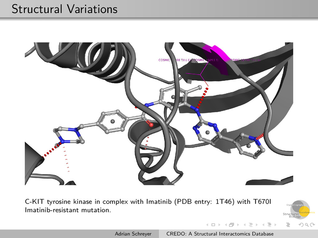 Structural Variations C-KIT tyrosine kinase in ...