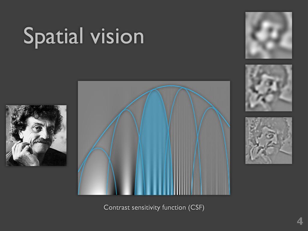 Spatial vision 4 Contrast sensitivity function ...