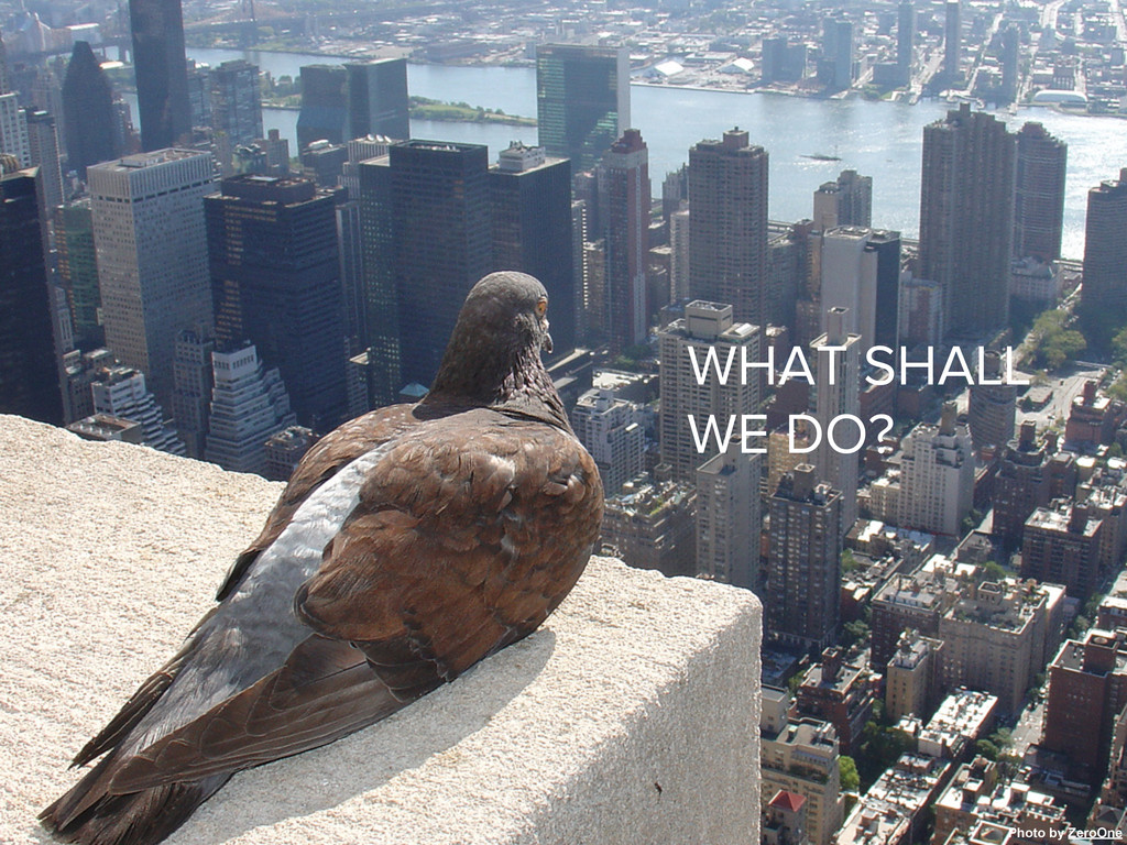 Picture by seier+seier WHAT SHALL WE DO? Photo ...