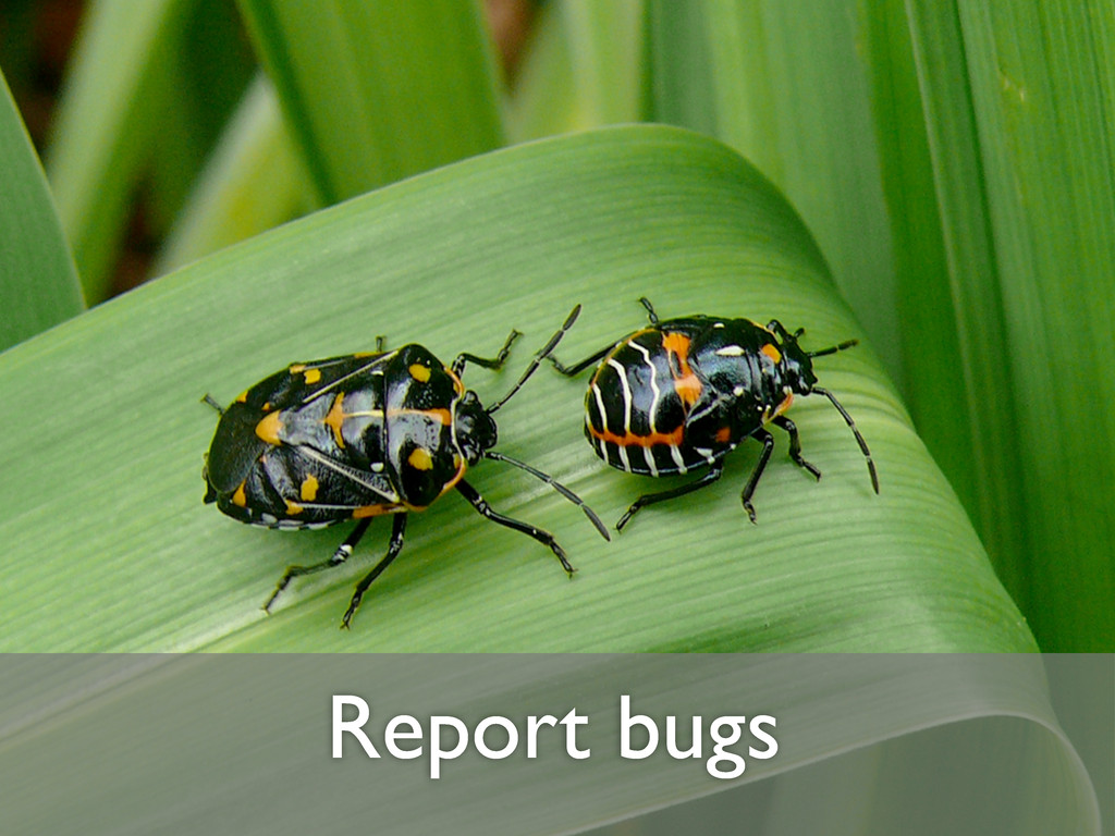 Report bugs