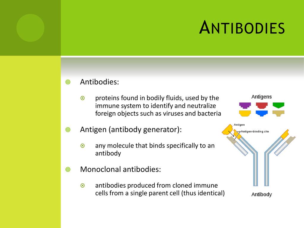 ANTIBODIES  Antibodies:  proteins found in bo...