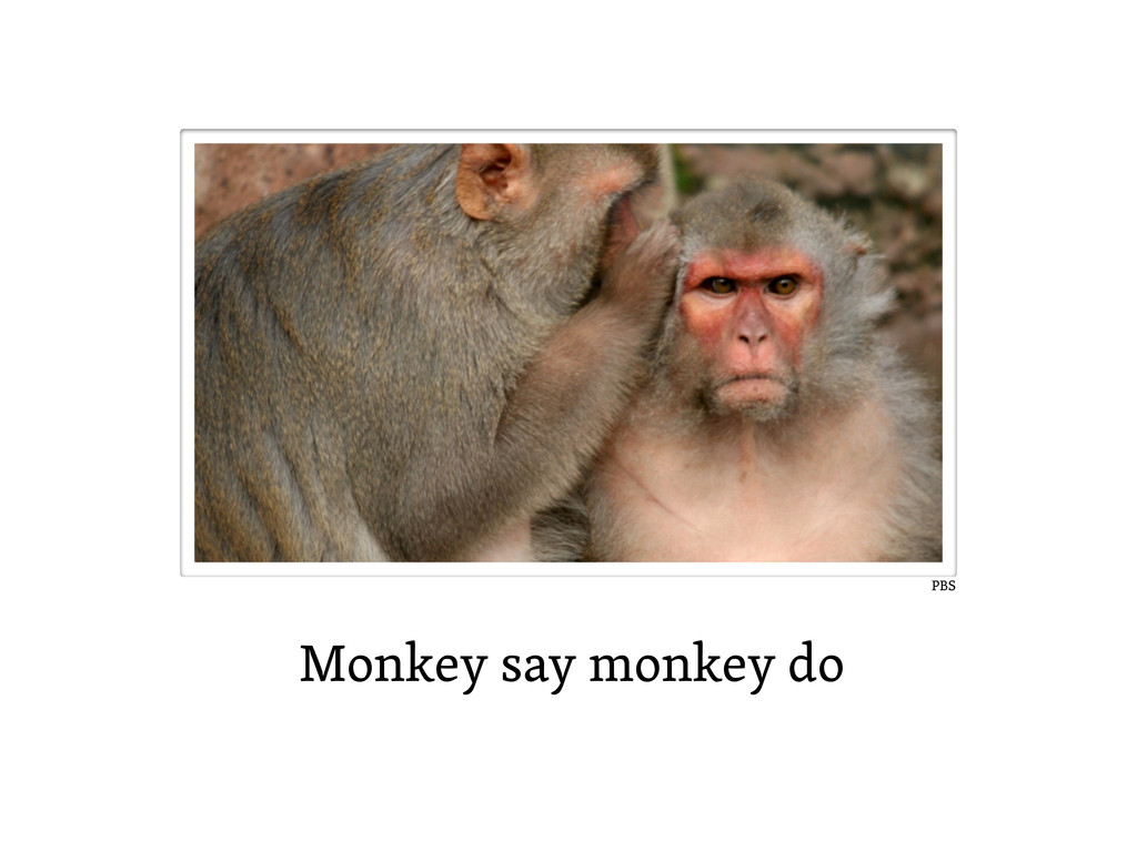 Monkey say monkey do PBS