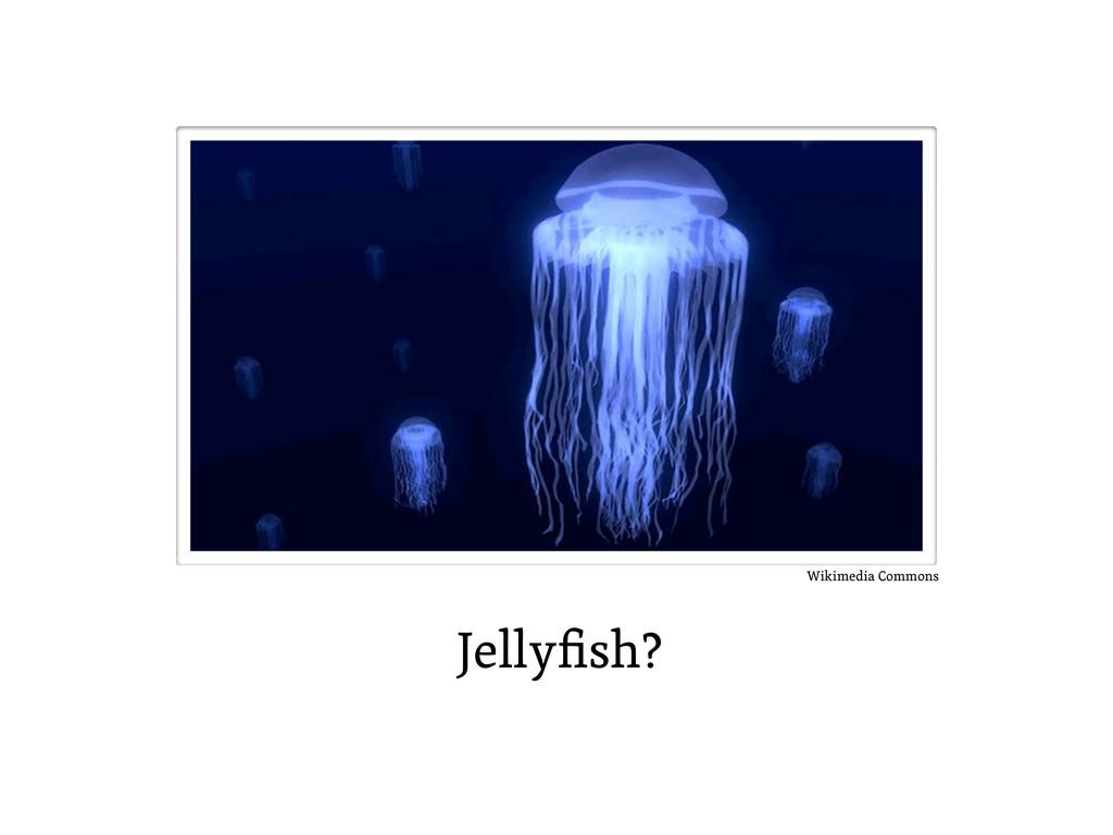 Jellyfish? Wikimedia Commons