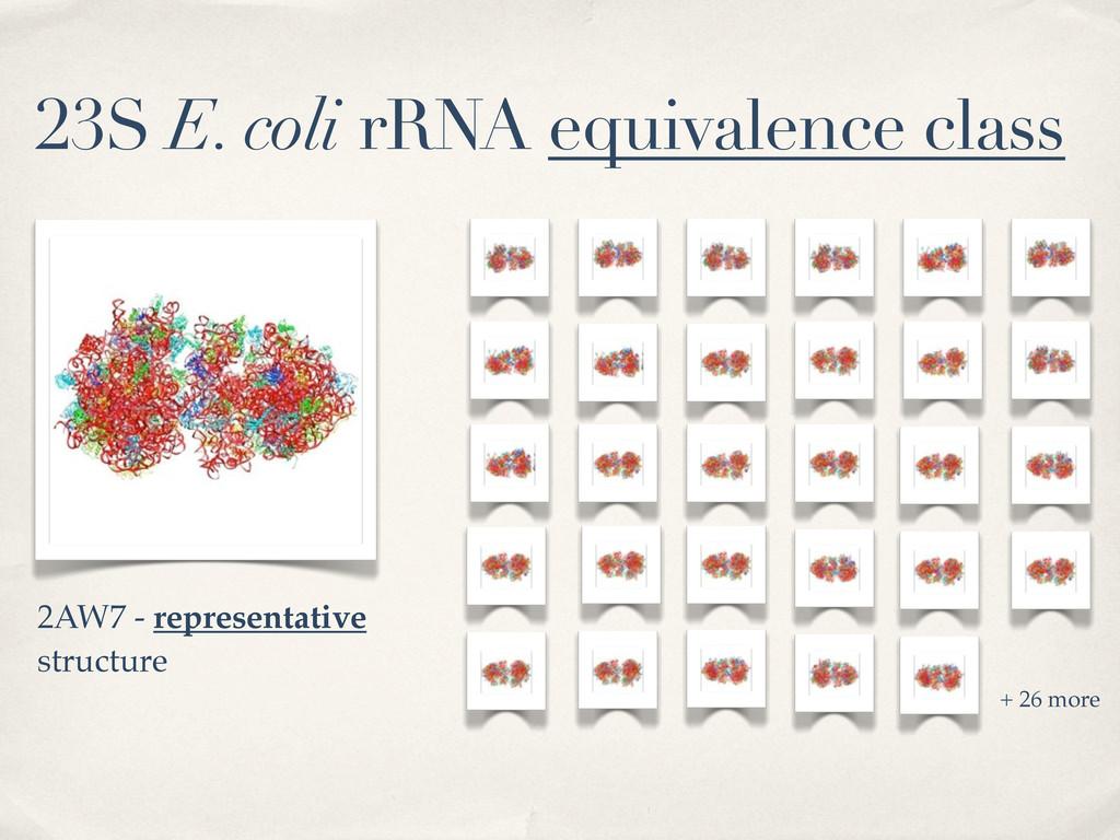 23S E. coli rRNA equivalence class + 26 more 2A...
