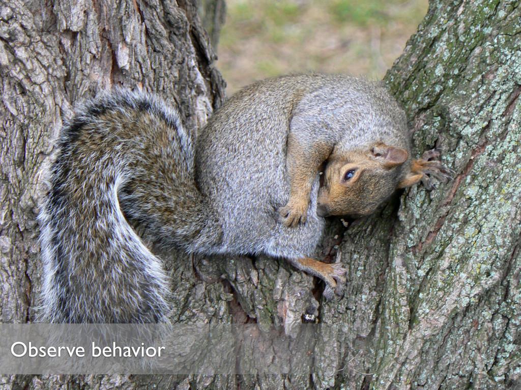 Observe behavior