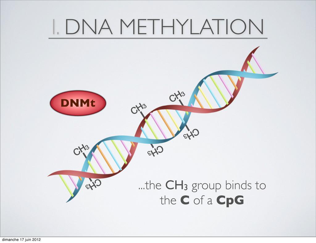 CH3 CH3 CH3 CH3 CH3 CH3 I. DNA METHYLATION DNMt...