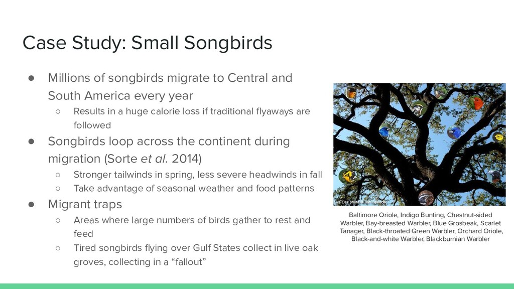 Case Study: Small Songbirds ● Millions of songb...