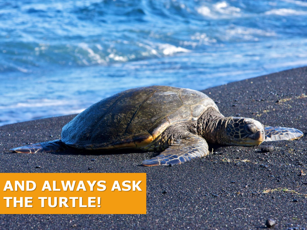 AND ALWAYS ASK THE TURTLE!