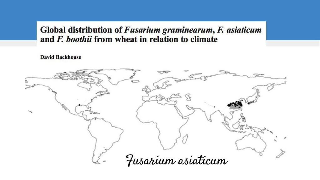 Fusarium asiaticum