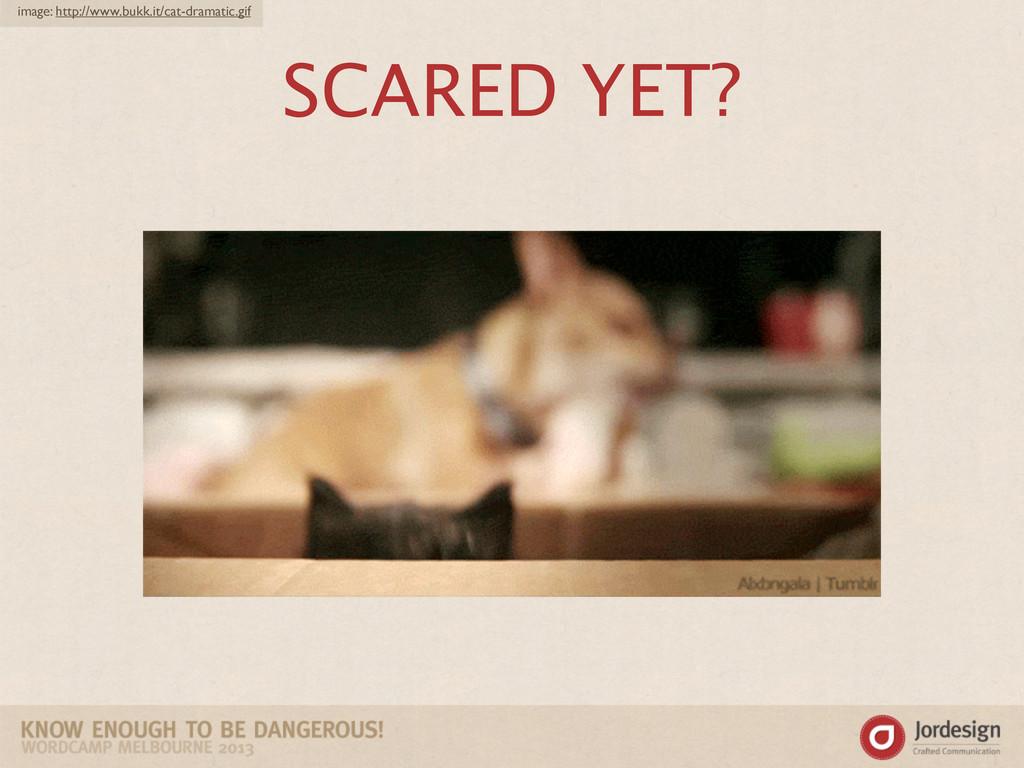 SCARED YET? image: http://www.bukk.it/cat-drama...