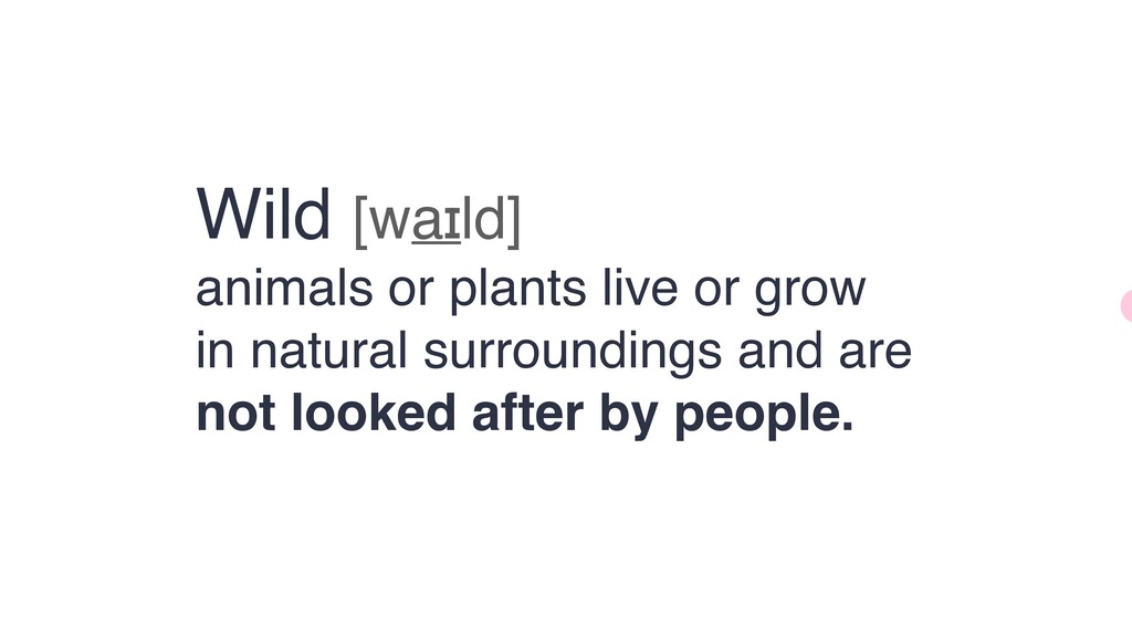 Wild [waɪld]