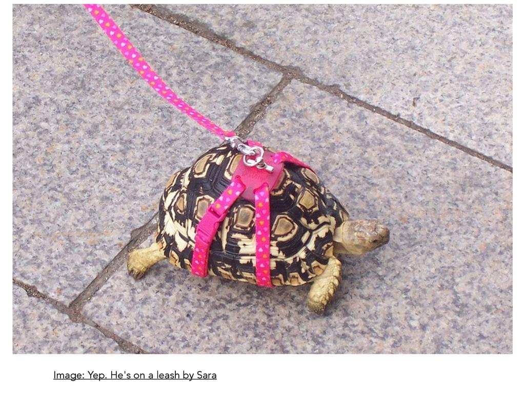 Image: Yep. He's on a leash by Sara